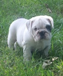 Cry Baby 8 Weeks